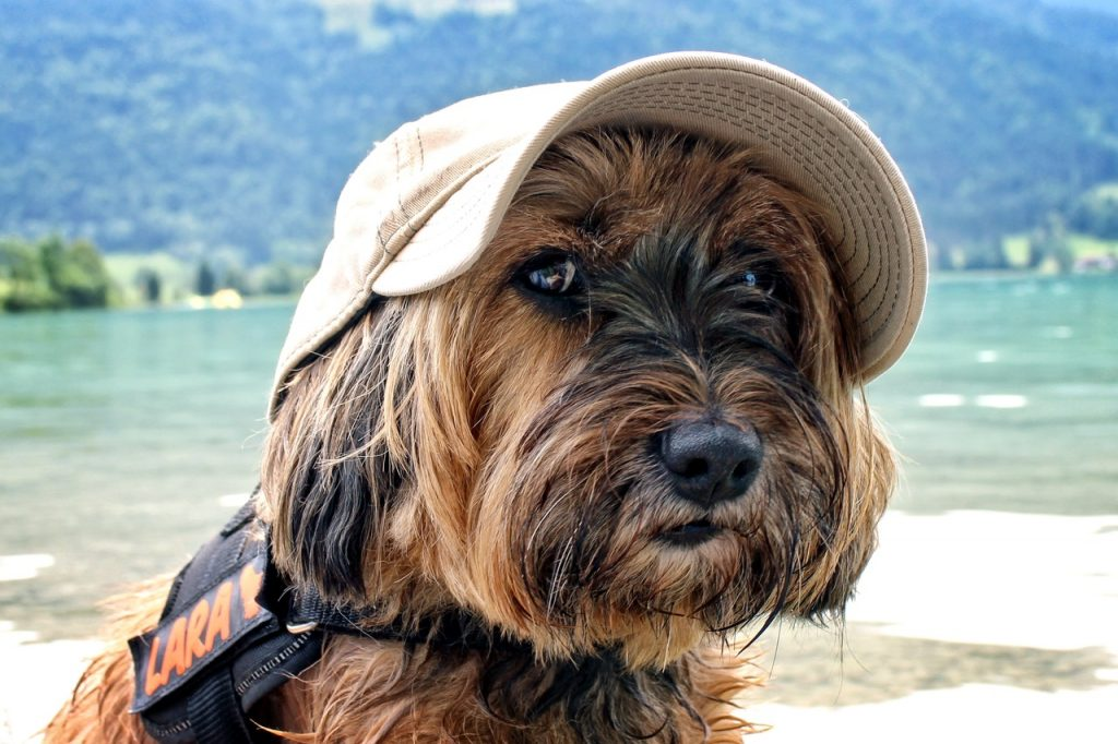 my late deals dog-friendly travel