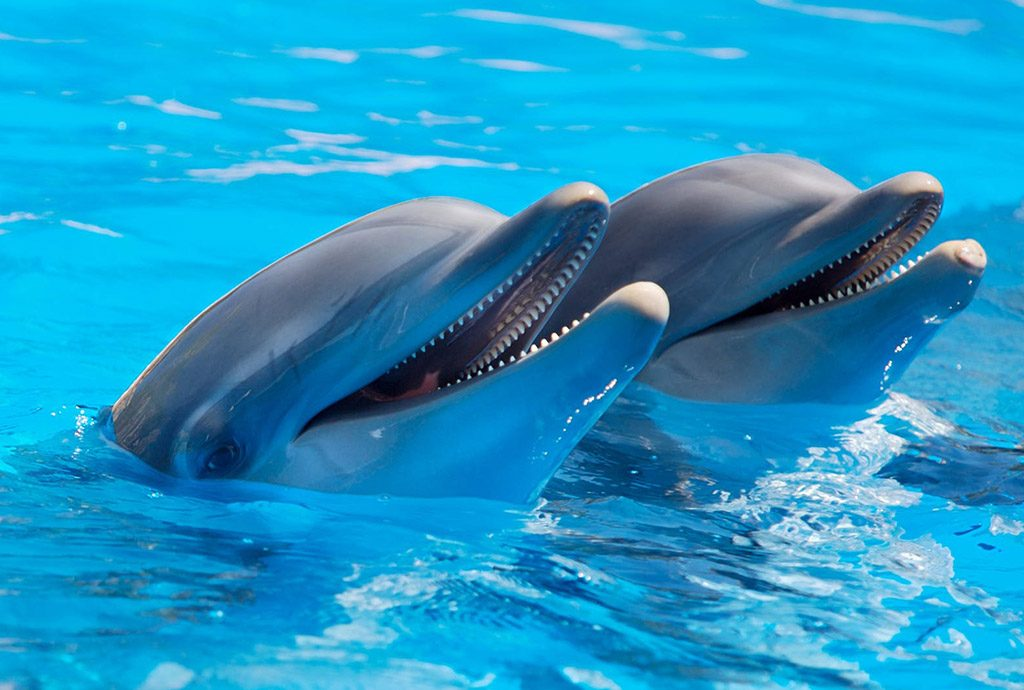 things to do in florida sea world
